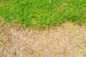 mesa lawn maintenance