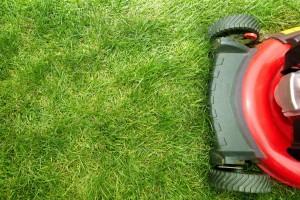 Scottsdale lawn services